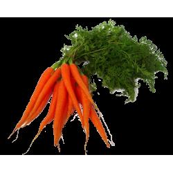 Zanahoria De Manojo (Manojo)