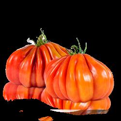 Tomate Cor De  Bou