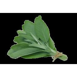 Salvia (Manojo)